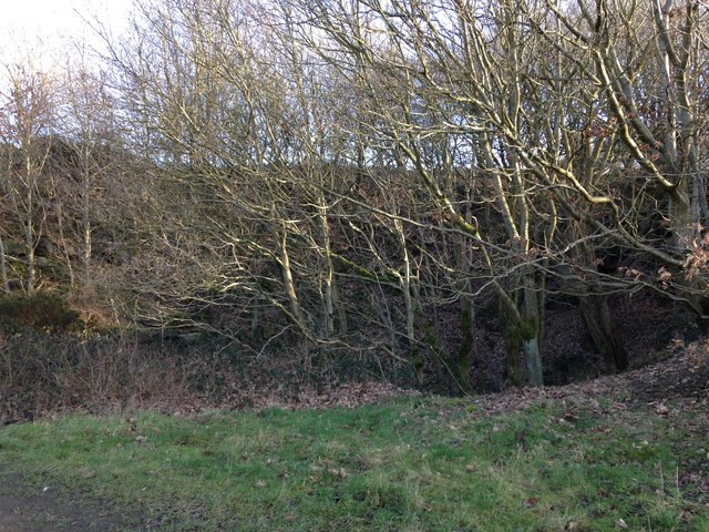 Disused quarry at Reins Wood