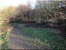 SE1322 : Footpath through Reins Wood next to the quarry by Richard Kay