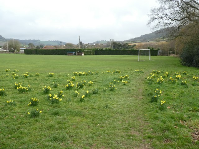 Daffodils and football pitch at Sidford