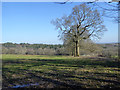 TQ3032 : Fields between Crawley Lane and Monks Forest by Robin Webster