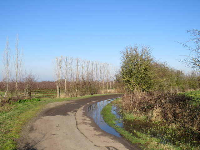 Country lane near High Halstow