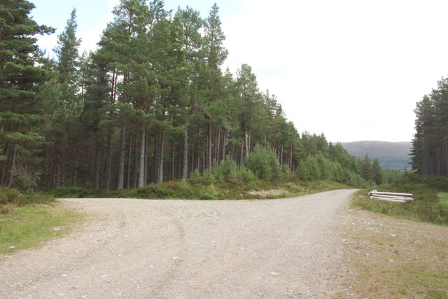 Track junction, Inshriach Forest