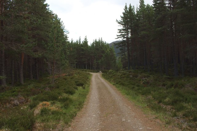Track, Inshriach Forest