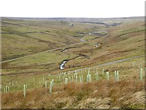 NY8944 : The meandering course of the Rookhope Burn by Oliver Dixon
