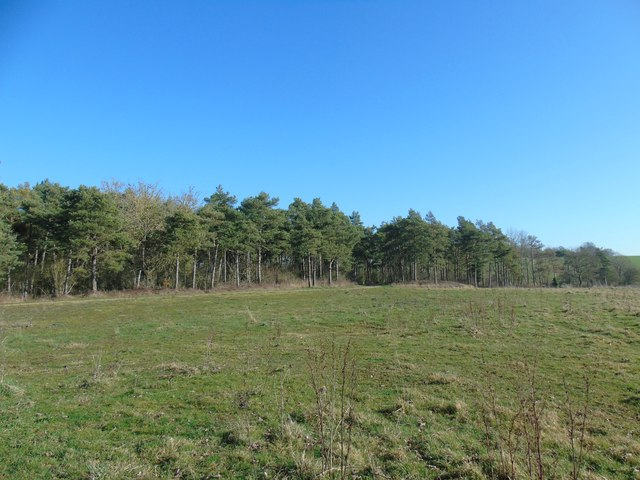 Edge of Wood and Bridleway