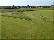 SJ6541 : Farm land near Cox Bank in Cheshire by Roger  Kidd