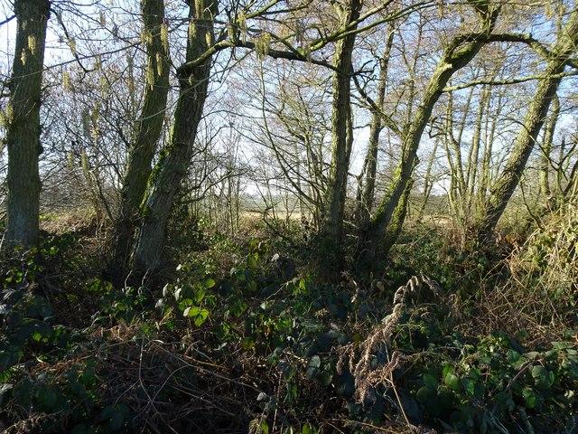 Cranmoor Wood