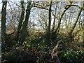 SJ8400 : Cranmoor Wood by Gordon Griffiths