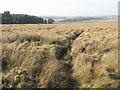 NT0247 : Moorland near Firpark by M J Richardson