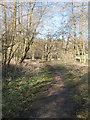 TL8293 : Path beside Lynford Lakes by David Pashley