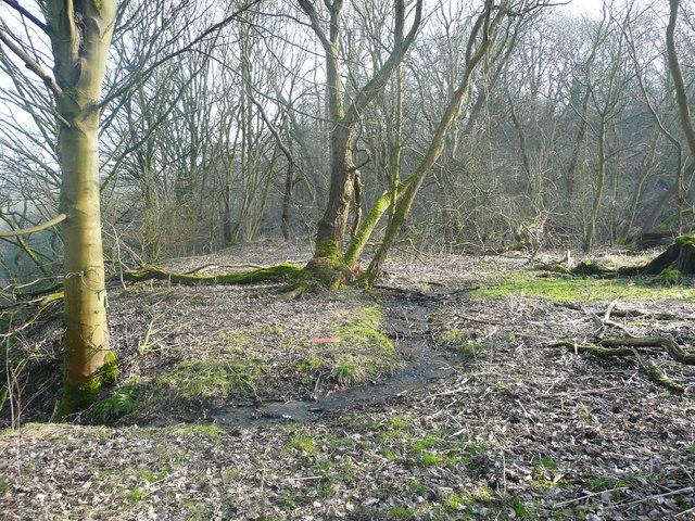 Stream in the woodland at Brackenbed, Wheatley, Halifax