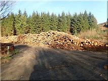 SJ1661 : Felled trees on Moel Famau by Eirian Evans