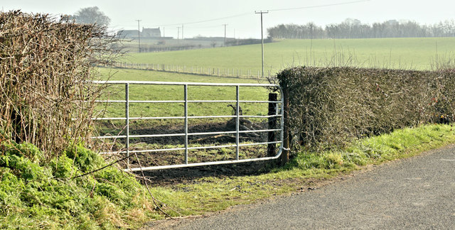 Field gate, Ballyrickard, Comber (February 2019)
