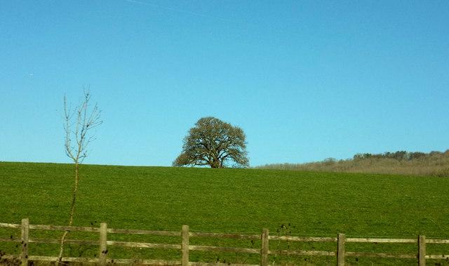 Tree near Flint Hall Farm
