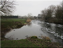 SK7953 : Newark branch of the Trent below the weir by Jonathan Thacker