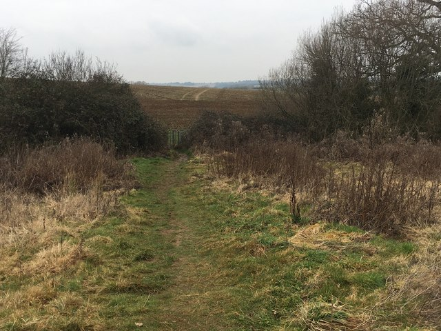 Path to Lince Lane