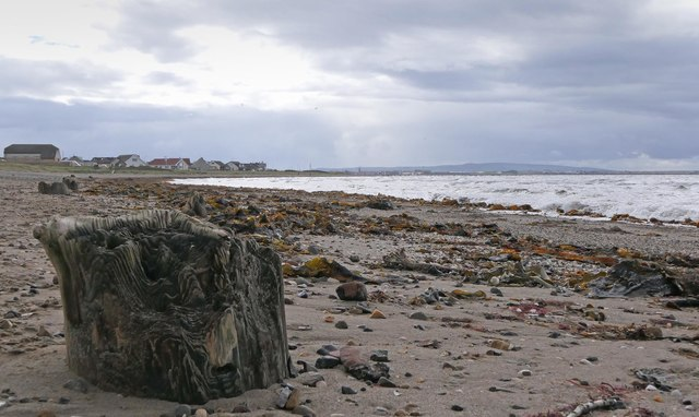Timbers on Barassie Sands, Ayrshire