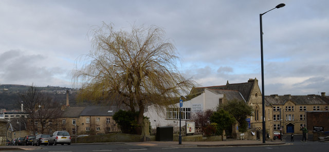 Tree at junction of Rosse Street and Kirkgate