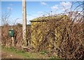 TG3408 : Small shed on the site of Brundall ROC Post by Evelyn Simak