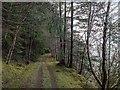 NH5123 : Forestry track by Loch Ness by valenta