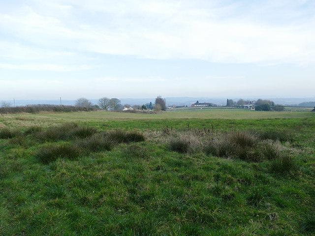 Long field alongside Tower Hill Road