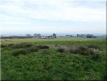 SJ8657 : Long field alongside Tower Hill Road by Stephen Craven