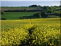 SU2276 : Oil-seed rape, Aldbourne by Andrew Smith