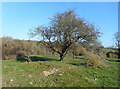 SP3425 : Site of Nether Chalford by Des Blenkinsopp