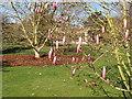 TQ1877 : Pink magnolia, Kew Gardens by David Hawgood