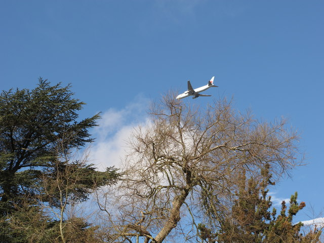 Kew Garden trees with airliner above