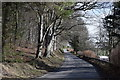 NJ7520 : Road beside the beech wood by Bill Harrison