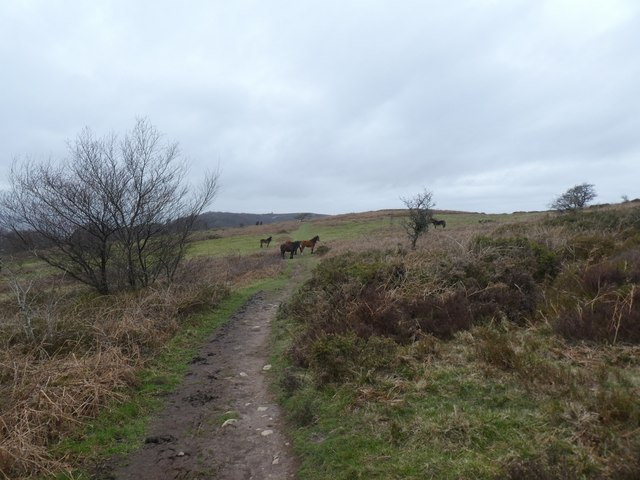 Lydeard Hill and Exmoor ponies
