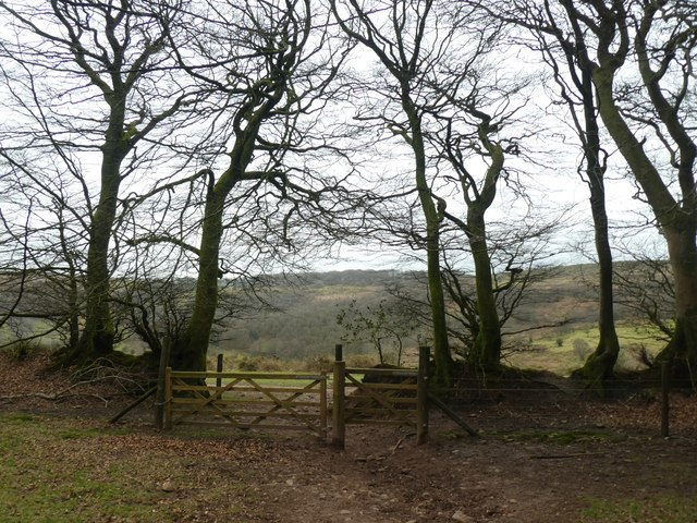 Gate from The Slades to Aisholt Common