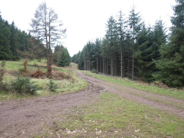 Junction of paths in The Slades with a firebreak