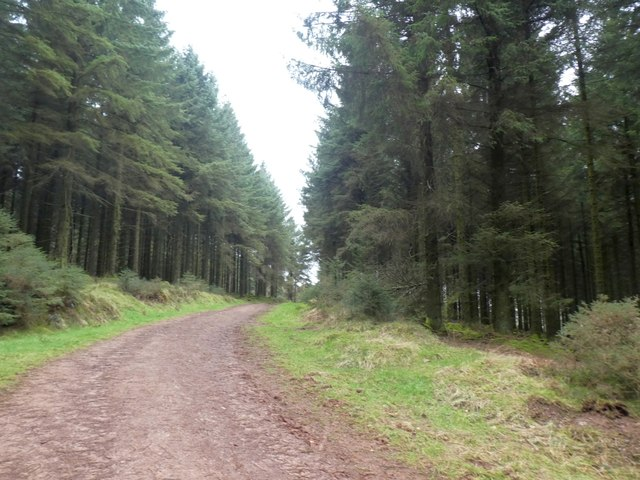Path between conifers in The Slades