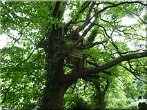 SO2160 : Treehouse by St. Mary's Church (New Radnor) by Fabian Musto