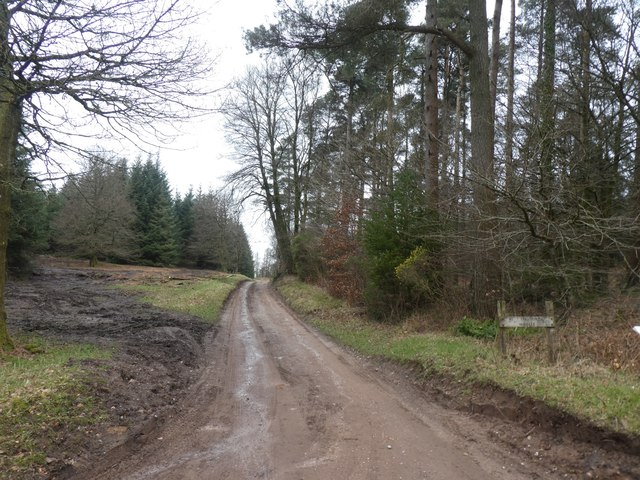 Track into woodland on Hart Hill