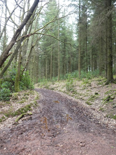 Track from Hart Hill to Great Wood