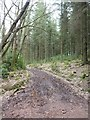 ST1636 : Track from Hart Hill to Great Wood by David Smith