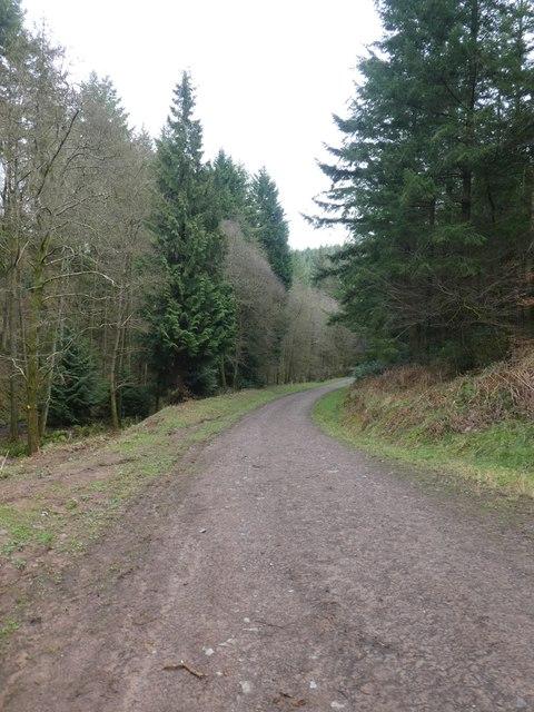 Track leading down Quantock Combe