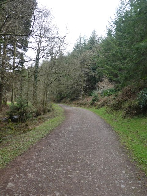 Track in Quantock Combe and Great Wood