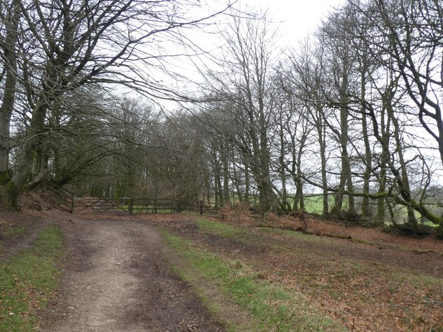 The Drove Road on Great Hill