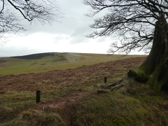 Grassland and bracken on Great Hill