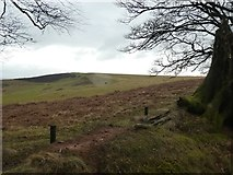 ST1536 : Grassland and bracken on Great Hill by David Smith