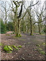 SE2539 : Path in Ireland Wood, Cookfidge by Humphrey Bolton
