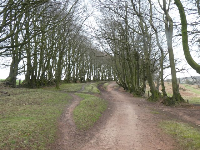 The Drove Road above Triscombe Combe