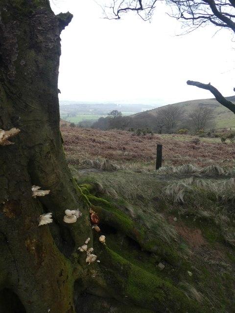 Fungi and bracken above Triscombe Combe