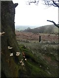 ST1636 : Fungi and bracken above Triscombe Combe by David Smith