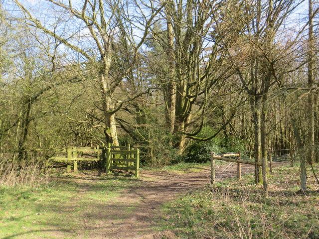 North Downs Way at Knockholt