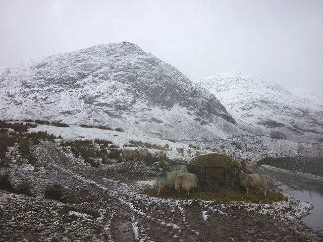 Hungry sheep in upper Kentmere